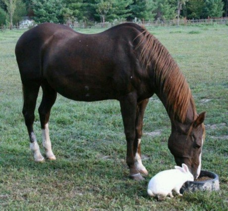 horse and bunny2
