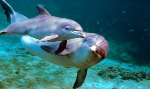 dolphins-baby.jpg