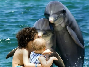 dolphins_with_kids-600x450.jpg