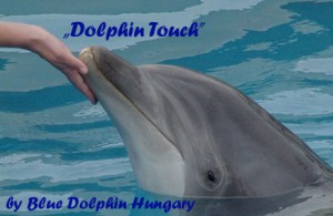 dolphin-touch-_.jpg